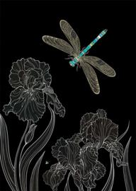 M153 Dragonfly Irises - BugArt