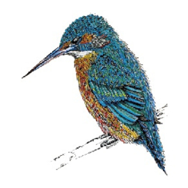 Stunningly beautiful Kingfisher