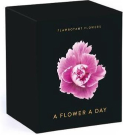 Flamboyant Flowers - A Flower A Day
