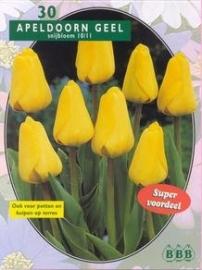 Tulipa Apeldoorn Geel, Darwin