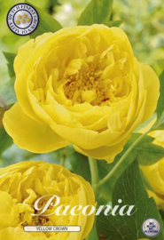 Paeonia Yellow Crown