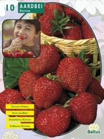 Erdbeeren Korona