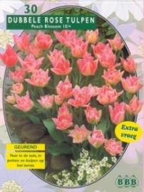 Tulipa Dubbel Vroeg Peach Blossom