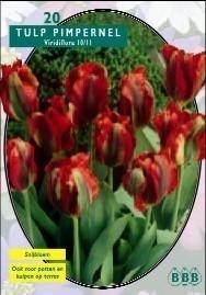 Tulipa Pimpernel, Viridiflora