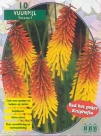 Kniphofia (Tritoma)
