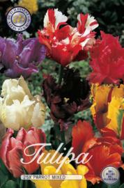 Tulipa Parkiet Mix