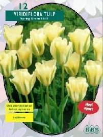 Tulipa Spring Green, Viridiflora