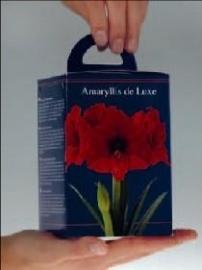 Amaryllis Rood vierkante doos