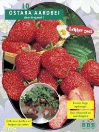 Erdbeeren Ostara