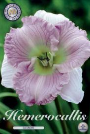 Hemerocallis Eleonore