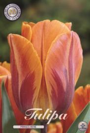 Tulipa Prinses Irene, Triumph