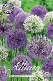 Allium paars/wit
