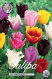 Tulipa Fringed Mixed