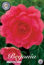 Begonia Dubbel, Roze
