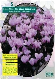 Cyclamen Neopolitanum Purple