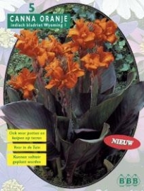 Canna Darkleaves Orange