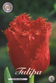 Tulipa Chrystal Beauty