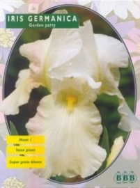 Iris Germanica Weiss