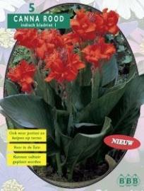 Canna groenblad, Rood