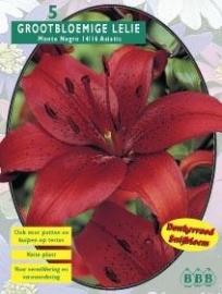 Lilium Monte Negro