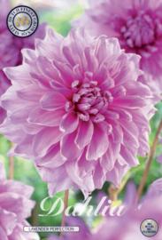 Dahlia Decoratief Lavender Perfection