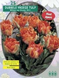 Tulipa Dubbel Vroeg Willem van Oranje