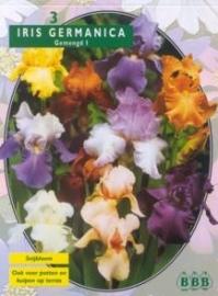 Iris Germanica Gemischt