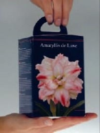Amaryllis Dubbel Rose vierkante doos