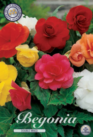 Begonia Doubleflowered Mixed