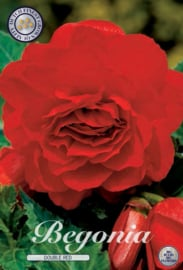 Begonia Doubleflowered Red