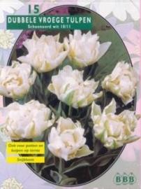 Tulipa Dubbel Vroeg Schoonoord