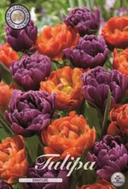 Tulipa Bravoure