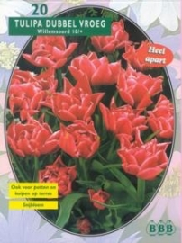 Tulipa Dubbel Vroeg Willemsoord