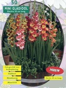 Gladiolus Miniatuur Gemengd