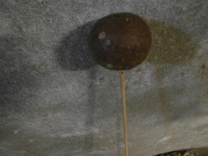 Bellani Ball