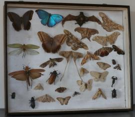 Grote vlinderkast
