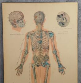 3 Oude Instructiewandkaarten  Acupunctuur
