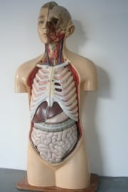 Antiek anatomisch torso. Papier mache met gips