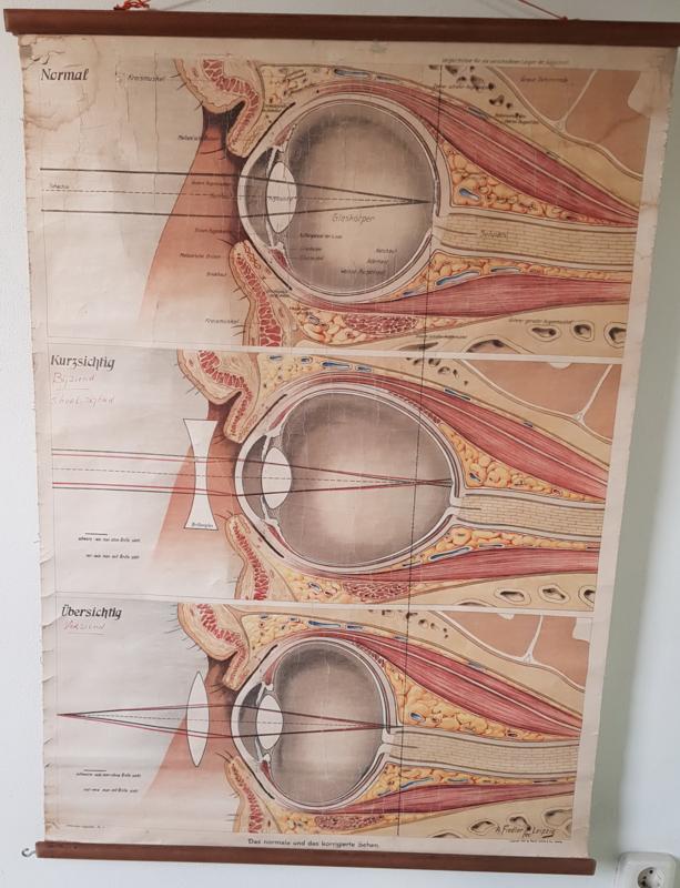 Schoolkaart het oog, 1916