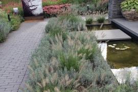 Lavendel Pflanzen-Paket für 3 qm.  (I)