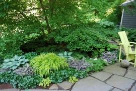 Schatten-Paket mit immer grün  Pflanzen   2-3  qm   (B)