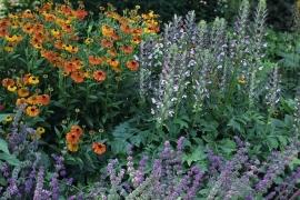 Pflanzenpaket Sun (D) für 2 Quadratmeter