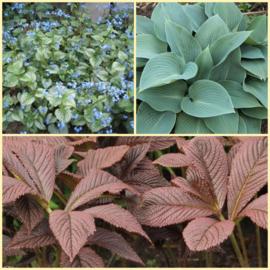 Pflanzen Paket Schatten (H) für 2 Quadratmeter