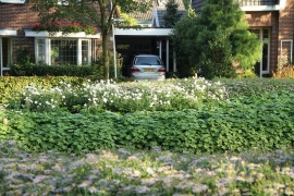 Wartungsarme Garten Paket Sun-teilweise Schatten 4 qm  (A)
