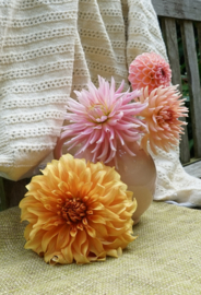Dahlia Hollyhill Cotton Candy