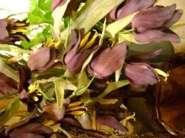 paarse keizerskroon