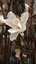 magnoliatak /107 cm / wit.