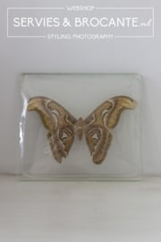 Opgezette vlinder