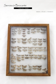 Vlinderkast/ Butterfly display SOLD