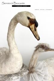 Witte zwaan/ White swan SOLD